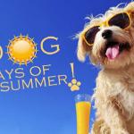 August 18, 2015—Daunting Dog Days . . .